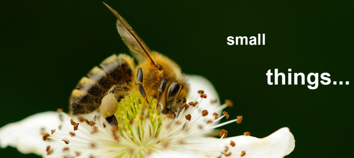 Small_Bee